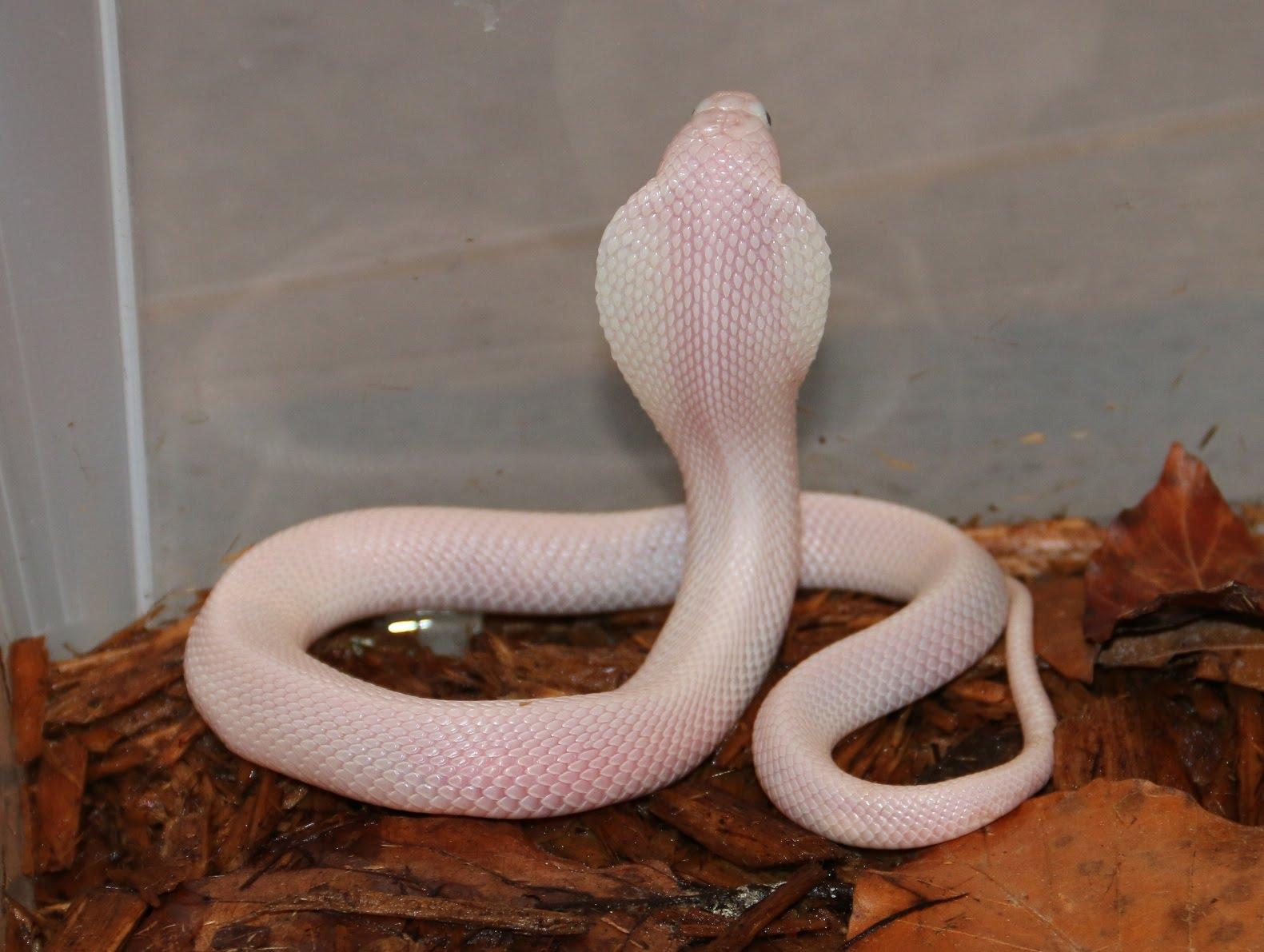 Rüyada küçük beyaz yılan ve yavrusu görmek ne demek