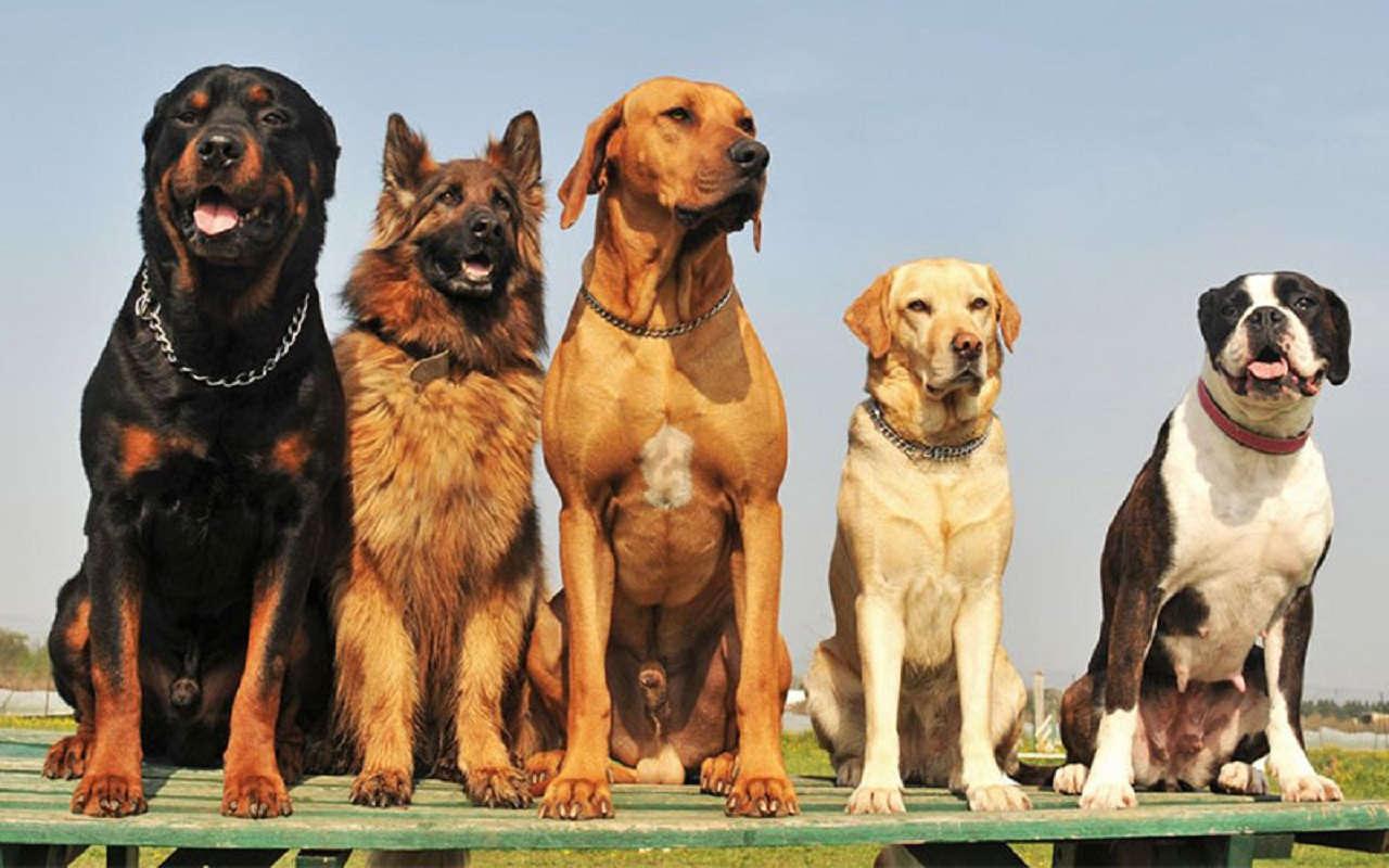 En güzel köpek isimleri