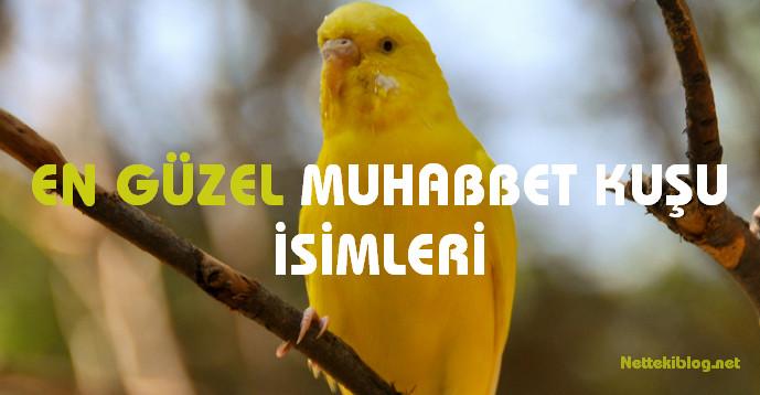En Güzel Muhabbet Kuşu Isimleri Netteki Blog